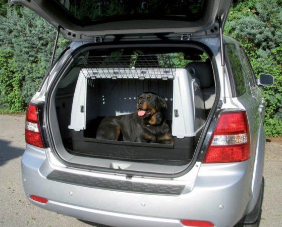 chien voiture